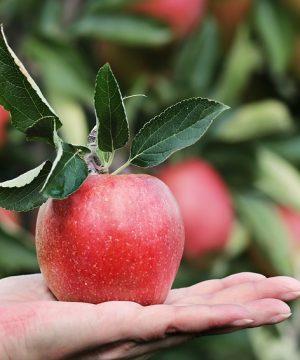 ako susit ovocie